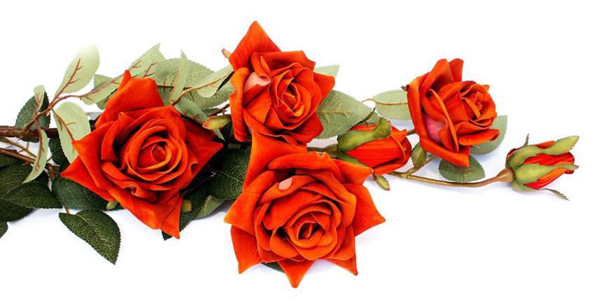 Tekst van onze rozenceremonie